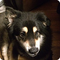 Adopt A Pet :: Hershey - Homer, NY