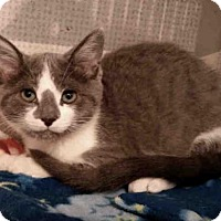 Adopt A Pet :: DOVE - Canfield, OH