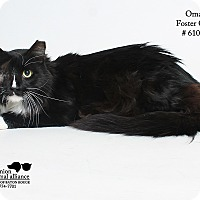 Adopt A Pet :: Omar (Foster) - Baton Rouge, LA