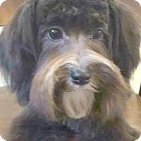 Adopt A Pet :: Riley-Adoption Pending - Boulder, CO