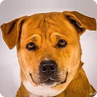 Adopt A Pet :: Bertha - Prescott, AZ
