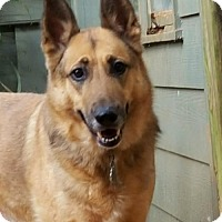 Adopt A Pet :: Kona - Dallas, GA