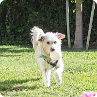 Adopt A Pet :: Russ - Imperial Beach, CA