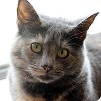 Adopt A Pet :: Gillian - Dallas, TX