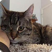 Adopt A Pet :: Matius - Salt Lake City, UT