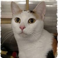 Adopt A Pet :: Banja - Pueblo West, CO