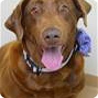 Adopt A Pet :: MATTIE (ECAS Kennel C3) - Pleasanton, CA