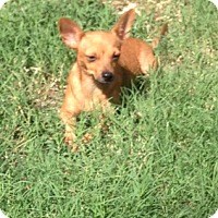 Adopt A Pet :: Murphy - Garland, TX