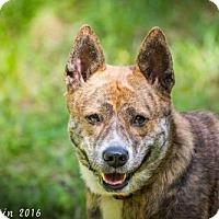 Adopt A Pet :: Bebe - Bradenton, FL