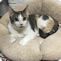 Adopt A Pet :: Beauty - Wichita, KS