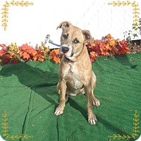 Adopt A Pet :: CARLOTTA - Marietta, GA