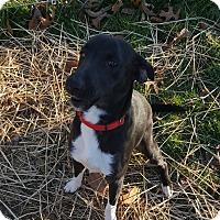 Adopt A Pet :: Jerry - Salem, OH