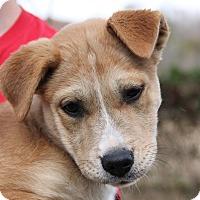 Shepherd (Unknown Type)/Terrier (Unknown Type, Medium) Mix Puppy for adoption in Pittsboro, North Carolina - Gracie