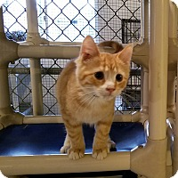 Adopt A Pet :: Phelps - Geneseo, IL