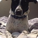 Adopt A Pet :: Kampbell