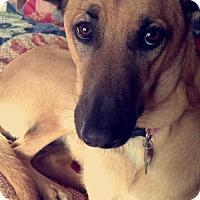 Adopt A Pet :: Luna - Roxboro, NC