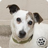 Adopt A Pet :: Eddie - Adoption Pending - Troy, OH
