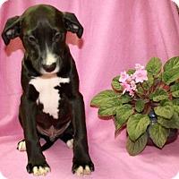 Adopt A Pet :: Nestle - Newark, NJ