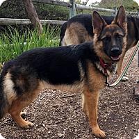 Adopt A Pet :: Kyla - Mira Loma, CA