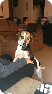 Beagle Mix Dog for adoption in McKeesport, Pennsylvania - Babe