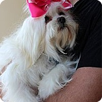 Adopt A Pet :: Berlin - Redondo Beach, CA
