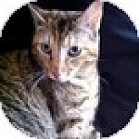 Adopt A Pet :: Georgia - Vancouver, BC