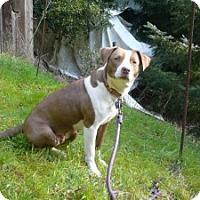 Adopt A Pet :: Molly Needs Adopter ASAP! - Sacramento, CA