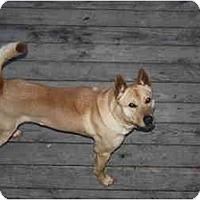 Adopt A Pet :: Tank - Marysville, CA