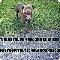Adopt A Pet :: Jessie - Naples, FL