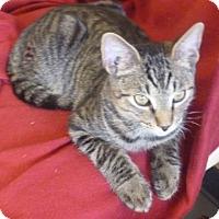 Adopt A Pet :: Kona - Fountain Hills, AZ