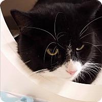 Adopt A Pet :: Oreo - Stafford, VA