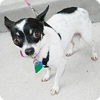 Adopt A Pet :: Chapita - Umatilla, FL