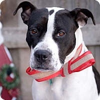 Adopt A Pet :: Toni - Corrales, NM