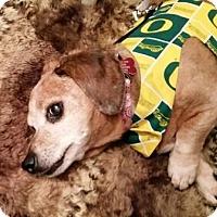 Adopt A Pet :: JANET aka Chloe - Portland, OR