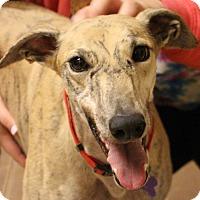 Adopt A Pet :: Ginger - Tucson, AZ