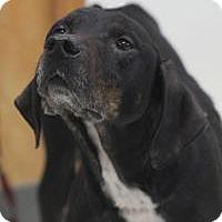 Adopt A Pet :: Utah - Yukon, OK