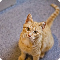 Adopt A Pet :: Kelly - Lincoln, NE