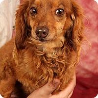 Adopt A Pet :: Lori Dash - St. Louis, MO