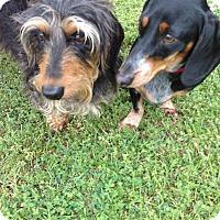 Adopt A Pet :: Freddy - Lubbock, TX
