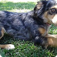 Adopt A Pet :: Mabel - Las Vegas, NV
