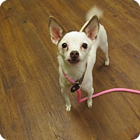 Adopt A Pet :: Hope - Lake Odessa, MI