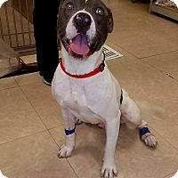 Adopt A Pet :: Tucker - Newport Beach, CA
