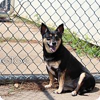 Adopt A Pet :: Choloe - Texarkana, AR