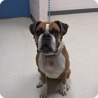 Adopt A Pet :: Roxy - Gulfport, MS