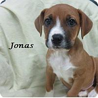 Adopt A Pet :: Jonas - Bartonsville, PA