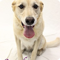 Adopt A Pet :: Sandy - Bradenton, FL