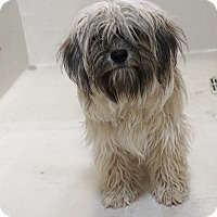 Adopt A Pet :: A11 Myrtle - Odessa, TX