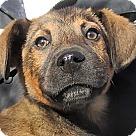 Adopt A Pet :: Layne