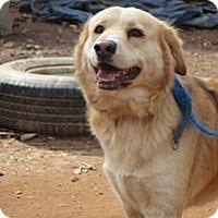 Adopt A Pet :: Prince - Conyers, GA