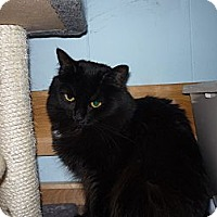 Adopt A Pet :: Samantha - Salem, OR